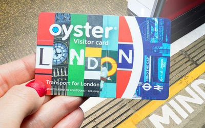 oyster visitor